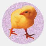 Polluelo en el movimiento etiquetas redondas