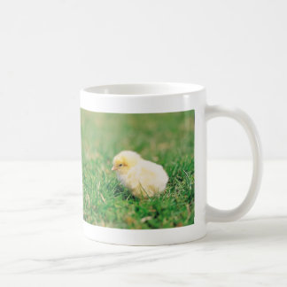 Polluelo en hierba tazas