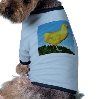 Polluelo en la hierba ropa para mascota