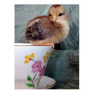 Polluelo en la taza postal