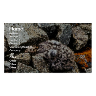 polluelo Glauco-con alas de la gaviota Plantillas De Tarjeta De Negocio