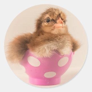 Polluelo lindo del bebé en el huevo de Pascua Pegatina Redonda
