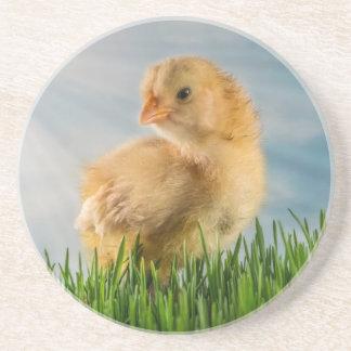 Polluelo lindo del bebé en hierba con la foto del  posavaso para bebida