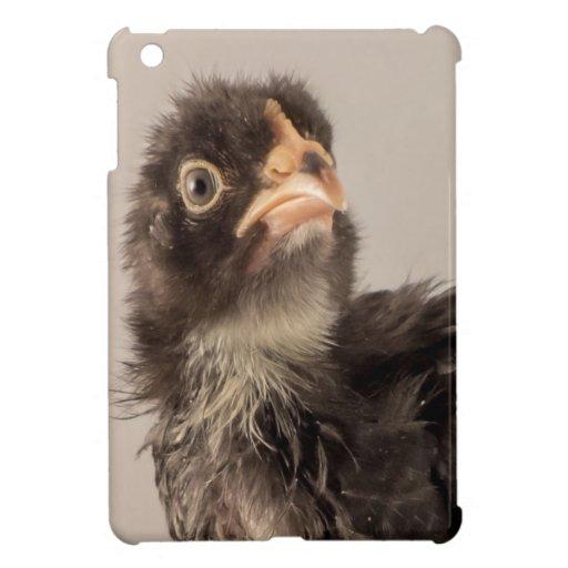 Polluelo negro de mirada gruñón del bebé con ceño
