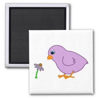 Polluelo púrpura con Coneflower púrpura Imán Cuadrado
