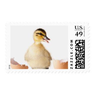 Polluelo recientemente tramado al lado de la sello postal