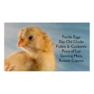 Polluelo viejo del día - capas o granja de las par tarjetas de visita