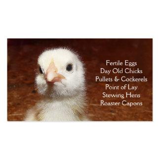 Polluelo viejo del día - capas o granja de las tarjetas de visita