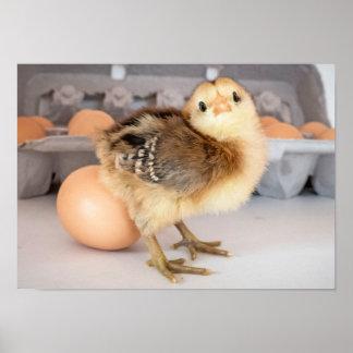 Polluelo y huevos preciosos del bebé póster