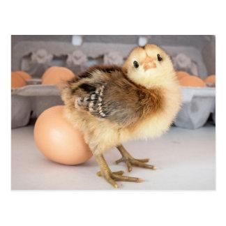 Polluelo y huevos preciosos del bebé tarjeta postal