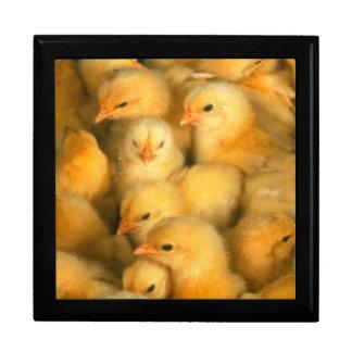 Polluelos amarillos del bebé cajas de recuerdo