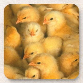Polluelos amarillos del bebé posavaso