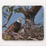 Polluelos de Eagle calvo - Mousepad Alfombrilla De Raton