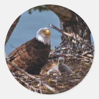 Polluelos de Eagle calvo - pegatina