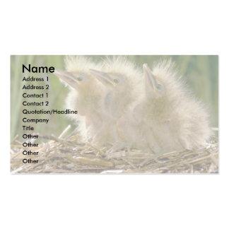 Polluelos de la agua madre de salmuera americana tarjetas de visita