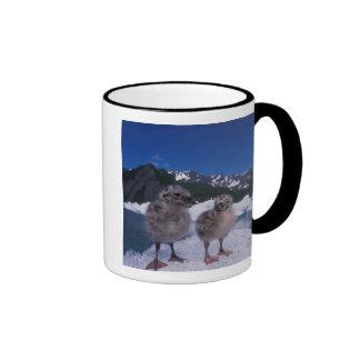 polluelos de la gaviota del muw, canus del Larus,  Taza De Café