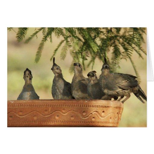Polluelos de las codornices tarjeta de felicitación