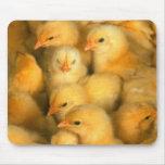 Polluelos del bebé alfombrillas de ratón