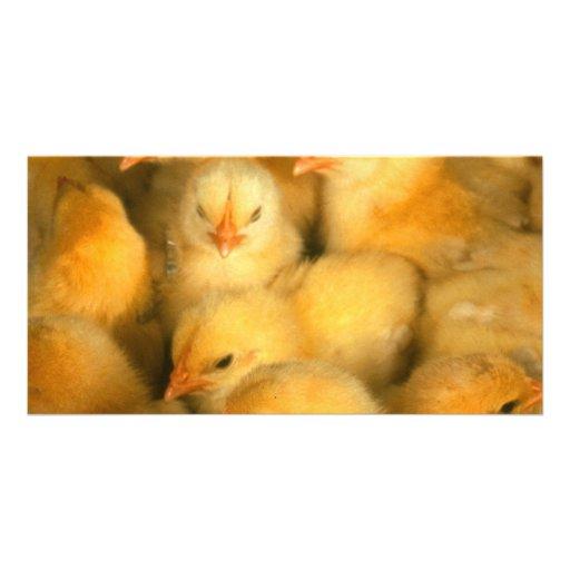 Polluelos del bebé tarjetas personales con fotos