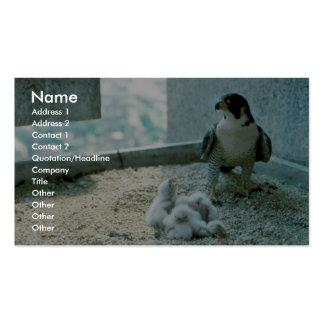 Polluelos del halcón de peregrino, femeninos plantilla de tarjeta de negocio