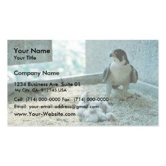 Polluelos del halcón de peregrino, femeninos plantilla de tarjeta personal
