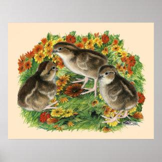 Polluelos del jardín de la codorniz póster