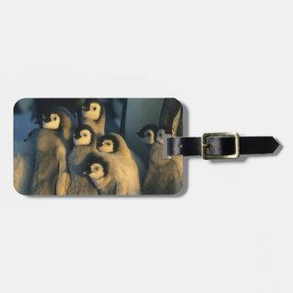 Polluelos del pingüino de emperador en la etiquetas para equipaje