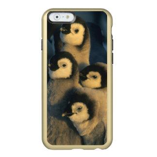 Polluelos del pingüino de emperador en la funda para iPhone 6 plus incipio feather shine