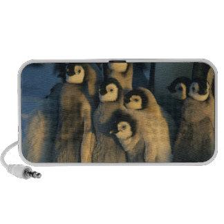 Polluelos del pingüino de emperador en la guarderí PC altavoces