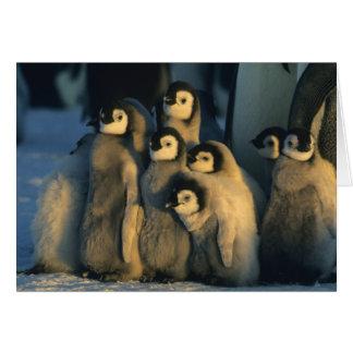 Polluelos del pingüino de emperador en la guarderí tarjeta de felicitación