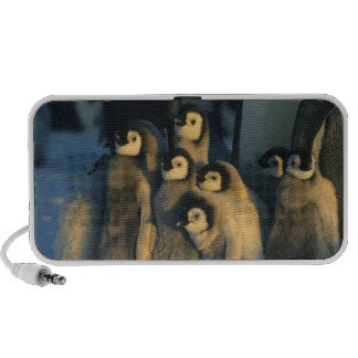 Polluelos del pingüino de emperador en la portátil altavoz