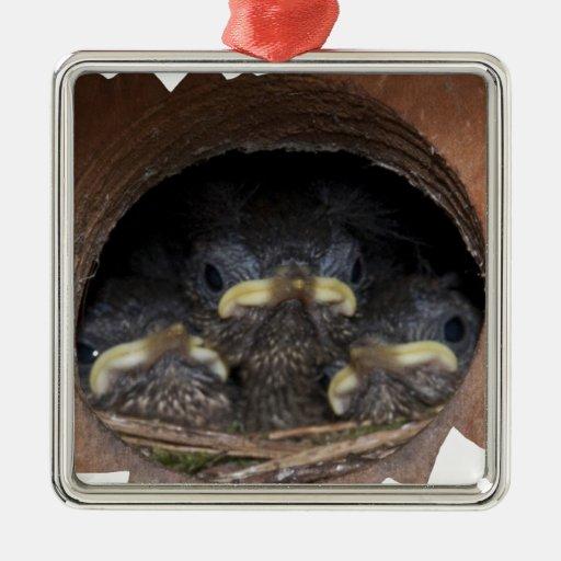 polluelos del wren de máquina de hilar adornos de navidad