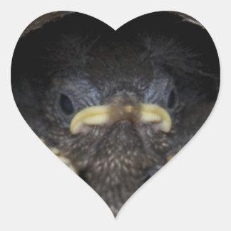 polluelos del wren de máquina de hilar pegatina en forma de corazón