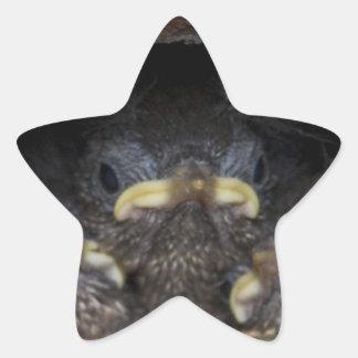 polluelos del wren de máquina de hilar pegatina en forma de estrella