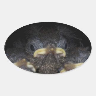 polluelos del wren de máquina de hilar pegatina ovalada