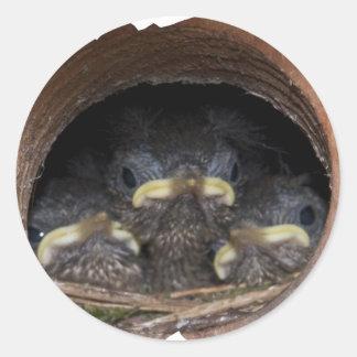 polluelos del wren de máquina de hilar pegatina redonda