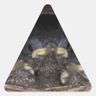 polluelos del wren de máquina de hilar pegatina triangular