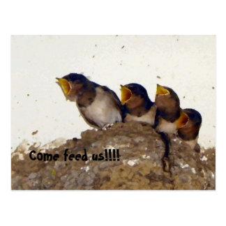 Polluelos hambrientos lindos del bebé del trago postales