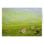 polluelos libres de la gama tarjetas