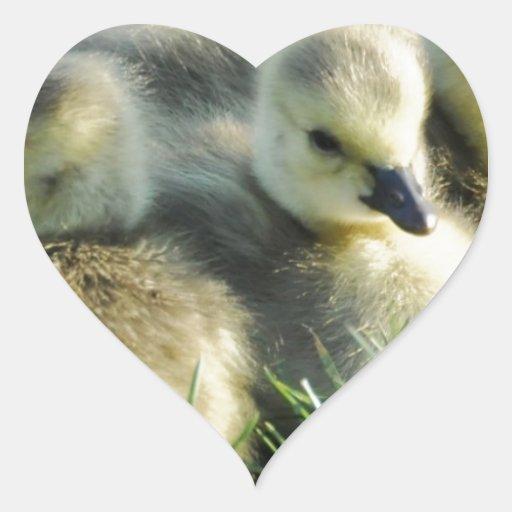 Polluelos Pegatina En Forma De Corazón