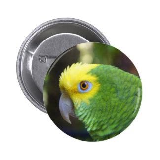 Polly Button