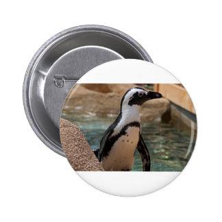 Polly Pinback Button