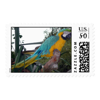 Polly Postage