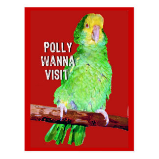 Polly Wanna Visit Appointment Reminder Card Postcard