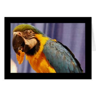 Polly's Notecard