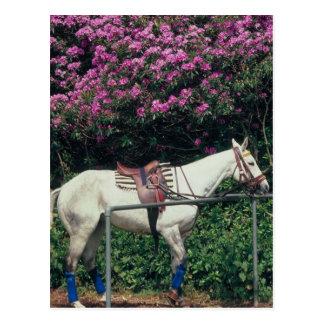 Polo Pony Awaiting Chukker Postcard
