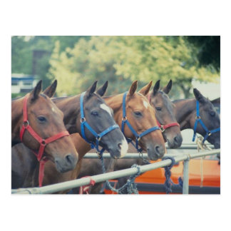 Polo Pony String Postcard