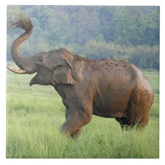 Polvo que se baña, nacional del elefante indio de  azulejos ceramicos