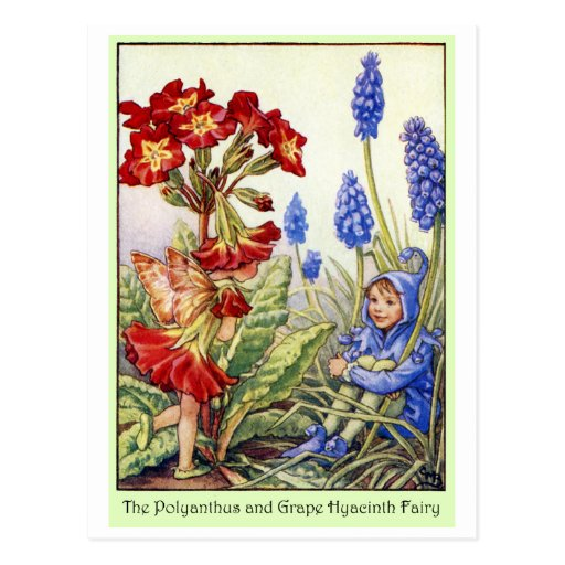 Polyanthus and Grape Hyacinth Fairy Postcard