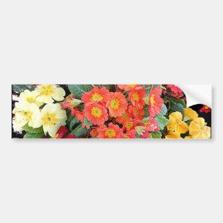 Polyanthus Flowers Bumper Sticker
